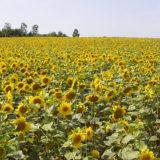 農閑期の冬こそ、農業者が関わる新たな事業に取り組めるタイミング~地元の農産品の加工食品などの製品開発や販売をしたい方は冬場のうちにスタートを